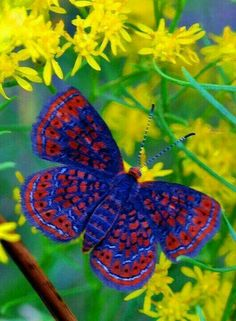 What a beautiful butterfly.