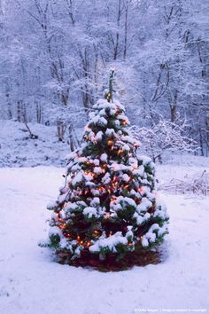 Christmas tree with fairy lights outside in snow