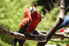 Did you know, that Colombia has 1889 different bird species? Sometimes you're even able to capture parrots in the middle of the city, besides all the other colorful birds.  #traveling #animals #nature