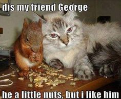 Funny cat and squirrel friend!!! www.PetFlow.com <3