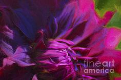 "Rip City Dahlia - Painting - WickedRefined - Black Dahlia flower, ""Dahlia, Asteraceae""; ""Demereckis, N.D., Wickedrefined, Wicked Refined""; digital art; ""flower, flowers, floral, Blossom, bloom""; No People; painting; pink; Purple; Rip City; Texture, canvas prints, prints, metal prints, acrylic prints, framed prints,"