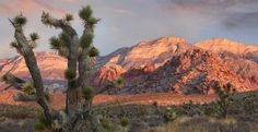 Hiking, biking and climbing are just a few attractions at Red Rock Canyon National Conservation Area.