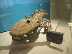 RT @TomHoltzPaleo: #FossilFriday Everyone's favorite temnospondyl, Erypos @NMNH