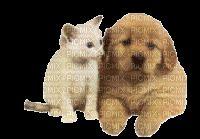 calin de chien et chat