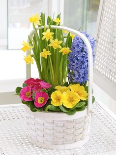 We've created this gorgeous basket of traditional spring flowering plants to really enhance their home with colour and freshness. Nature's finest are all here, including these exquisite mini daffodils – one of the first bulbs to bloom when spring arrives.<br /><br />Featuring a yellow tête-à-tête, a yellow primrose, a cerise primrose and a blue hyacinth, planted in a circular white softwood basket.