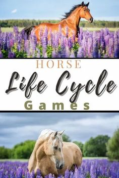 Horse Life Cycle Learning Games Booklet - Thrifty Mommas Tips Spring Coloring Pages, Cool Coloring Pages, Spelling Activities, Educational Activities, Learning Games, Learning Tools, My Solar System, Bee Life Cycle, Riding Lessons