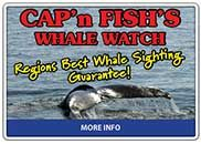 Cap'n Fish's Whale Watch