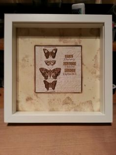 Butterfly box canvas