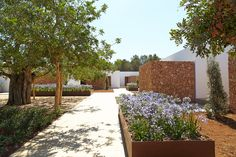 Modern landscaping with ancient trees at Ca Na Xica hotel, Ibiza with Modern guest pavilions by architect Marc Tur Torres. Architecture Awards, Landscape Architecture, Ex Hacienda, Ibiza Formentera, Spanish Garden, Desert Homes, Modern Landscaping, Patio, Hotel Ibiza