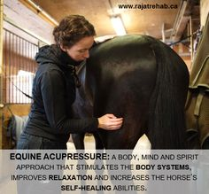 Equine acupressure: a body, mind and spirit approach that stimulates the body system, improves relaxation and increases the horse's self-healing abilities.