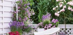 Small Rose Garden | Growing Roses in Containers (Balcony, Patio and Terrace)
