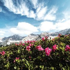 Zuhause in den Bergen ❤️. *** The mountains are like home ❤️. *** Heinz Zak*** #olympiaregionseefeld #tirol #österreich #urlaubindenbergen #wandern #familie #natur Heinz, Bergen, Mountains, Nature, Travel, Hiking, Ad Home, Naturaleza, Viajes