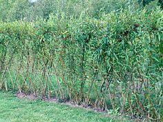 Decorative Garden Fencing, Reed And Cane Garden Fence, Garden
