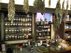 drying herbs by hanging | Herbs hanging to dry and dried herbs stored in jars on shelves.