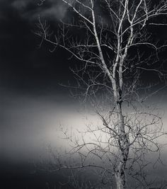 Black and White Photo of Tree and Sky Entitled by CarlaDyck, $30.00