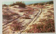 Sand Verbens Plants On The Desert Yuma Arizona Blooming On The Desert 1967 P Yuma Arizona Arizona Yuma