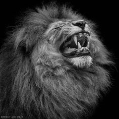 Photograph roar by Wolf Ademeit on 500px