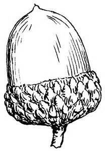 ... - http://www.wpclipart.com/plants/seeds_nuts/acorn/Acorn_BW.png.html