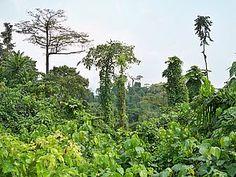 RegenwaldKamerun©ProWildlife