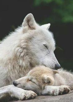 Love of a parent transcends all