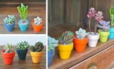 Okay I have got to have one of each of these for my desk--- Meet the *Spring Collection*   The Sill #deskdecor