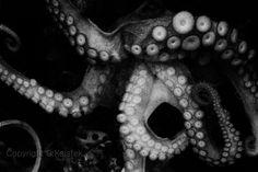 Octopus Photograph Sea Creature Tentacles Ocean Life Photography black and white sea wall art 8x12. $30.00, via Etsy.