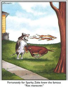 """""""Fortunately for Sparky, Zeke knew the famous Rex maneuver."""""""
