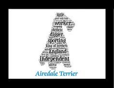 Der unbestrittene King von the Terrier der Airedale ist sicherlich ein regal Begleiter zu genießen. Und jetzt können Sie teilen, was Ihren besten vierbeinigen Freund mit dieser angepassten Airedale Terrier-Illustration so erstaunlich macht!  Ich begann mit meiner Liebe zu Tieren und wie viel Forschung, wie ich über den Airedale erhalten könnte, in dieser Abbildung ist gefüllt mit all den wunderbaren Eigenschaften und Persönlichkeitsmerkmale, die die Airedale neben den anderen Terrier…