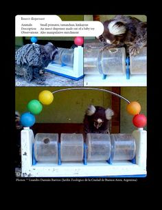 Feeding enrichment - insect dispenser. Animal Welfare in Captivity and Environmental Enrichment book. Download free in English and/or Spanish on: https://www.scribd.com/collections/5757077/Animal-enrichement-and-welfare https://www.academia.edu/8754986/Environmental_Enrichment_and_Well-Being_of_Captive_LATAM_Mammals https://www.academia.edu/8755049/Enriquecimiento_Ambiental_y_Bienestar_de_Mam%C3%ADferos_en_Cautiverio
