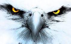 Resultat d'imatges de eagle eye tattoo