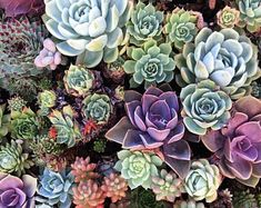 Unique Succulents Wedding Ideas & Trends for 2018 Wedding Blog, Wedding Planner, Wedding Ideas, Third Eye Awakening, Ceremony Backdrop, Flower Of Life, Sacred Geometry, Absolutely Gorgeous, Backdrops
