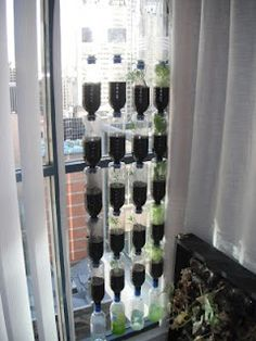great way to reuse plastic water bottles!  plant herbs, veggies and berries =)