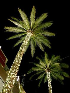 Light Decorations, Christmas Lights, Palm Trees, Paradise, Los Angeles,  Florida, Patio, Christmas Rope Lights, Terrace