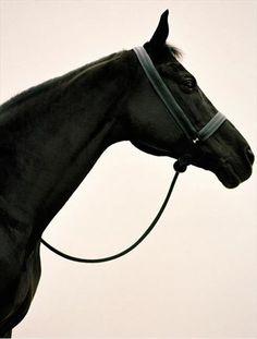 black horse.