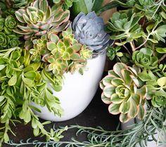 Succulent takeover. #succulents | LILLA BELLO Succulents, Heart, Instagram Posts, Floral, Plants, Flowers, Succulent Plants, Plant, Flower