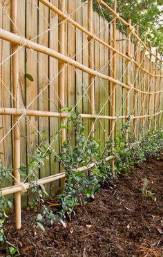 Bamboo trellising