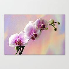 Pastel Rainbow Orchid Stretched Canvas by Judy Palkimas