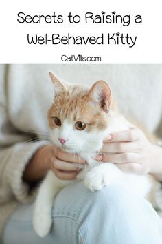 Want to know the top secrets to raising a well-behaved kitty? Sign up now to get useful tips and guides!