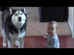 Husky sings with baby  So cute!
