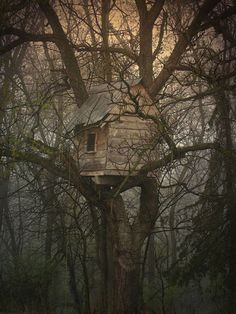 Beautiful Tree Houses ~ Damn Cool Pictures