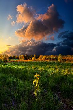 I Need You by Phil Koch on 500px