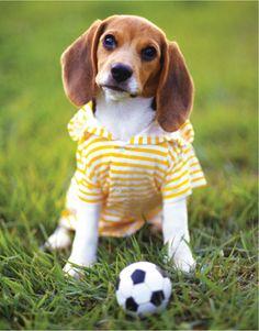 Soccer beagle 100 piece puzzle lpfpuzzle.com