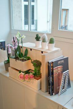 Ojala no se me muriesen las plantas, sí los cactus también se me mueren... :'(