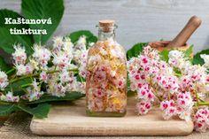 Kaštanová tinktura z květu jírovce maďalu recept postup návod příprava suroviny ingredience Feta, Glass Vase, Table Decorations, Health, Geranium, Lotion, Naturopathy, Natural Treatments, Flowers