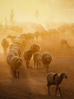 The way to come home Photo by Anh Nguyễn -- National Geographic Your Shot Wyoming, Farm Animals, Cute Animals, What Dreams May Come, Shot Photo, Native Art, National Geographic Photos, The Real World, Your Shot