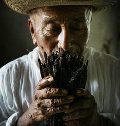 Vainilla de la Huasteca  Look at those beautiful hands