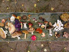 Various shrooms