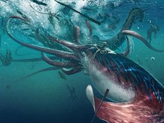 For GIANT SQUID fans: Squid film footage and a TED talk by Edith Widder, on how A Team Of Deep-Sea Explorers Found One Of The Ocean's Most Elusive Creatures! The Kraken appears around minute Ocean Creatures, Fantasy Creatures, Mythical Creatures, O Kraken, Release The Kraken, Giant Squid, Mythological Creatures, Sea Monsters, Ted Talks