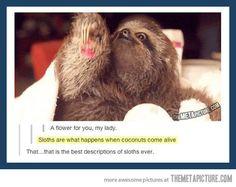 Best description of sloths ever…
