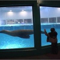 Aquarium of niagara niagara falls ny